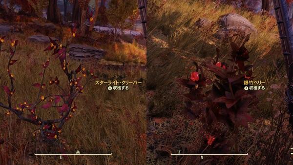 Fallout 76 スターライト・ベリーと爆竹ベリー